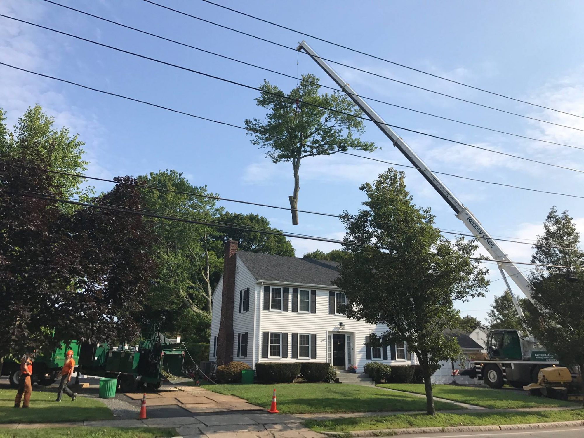 tree branch suspended in air as service equipment removes tree from property